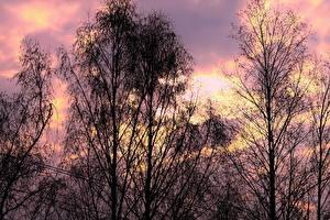 Fotos Sonnenaufgänge und Sonnenuntergänge Bäume Ast Natur