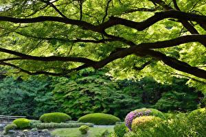 Hintergrundbilder Garten Japan Ast Shinjuku Gyoen Natur