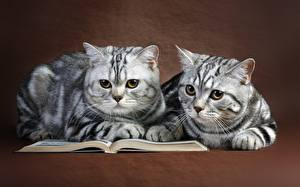 Wallpapers Cat Two Glance Book Animals