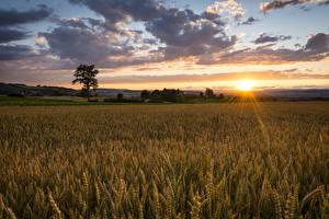 Bilder Acker Sonnenaufgänge und Sonnenuntergänge Ähre Wolke