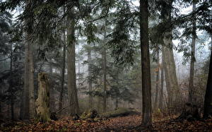 Pictures Forest Trees Fog Tree stump Nature