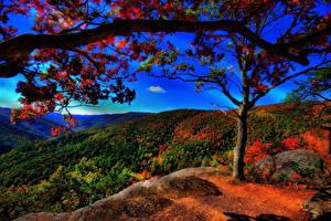 Fotos Jahreszeiten Herbst Wälder Landschaftsfotografie Bäume Ast HDR Natur
