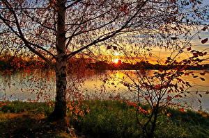 Bilder Flusse Russland Sonnenaufgänge und Sonnenuntergänge Bäume Birken Ast  Natur