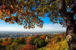 Pictures Germany Dresden Trees Nature Cities