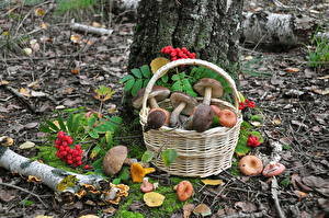 Hintergrundbilder Pilze Natur Weidenkorb