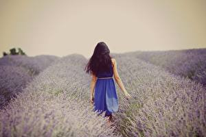 Bilder Acker Lavendel Natur Mädchens