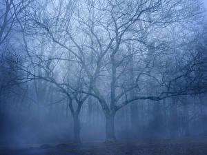Fotos Wälder Bäume Ast Nebel Natur