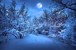 Bilder Jahreszeiten Winter Schnee Mond Ast Natur