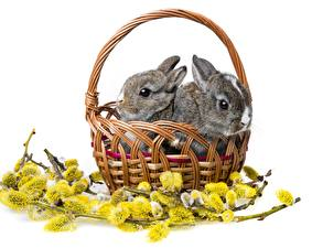 Image Rodents Rabbits Two Wicker basket Animals
