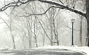 Bilder Jahreszeiten Winter Ast Schnee Straßenlaterne Natur