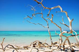 Hintergrundbilder Meer Strand Ast Natur