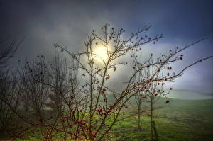 Fotos Landschaftsfotografie Nebel Ast Natur