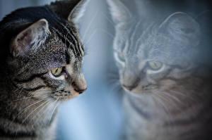 Hintergrundbilder Katze Blick Glas Fenster ein Tier