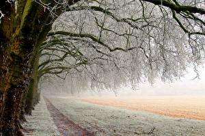 Fotos Winter Bäume Schnee Ast Natur