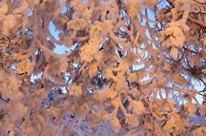 Hintergrundbilder Jahreszeiten Winter Großansicht Schnee Ast Natur