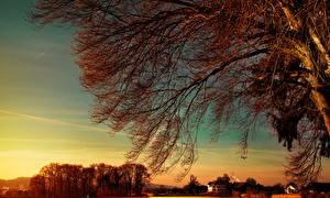 Fotos Österreich Sonnenaufgänge und Sonnenuntergänge Himmel Bäume Ast Natur