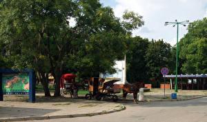 Hintergrundbilder Parks Pferde Litauen Bäume Klaipeda Natur