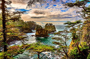 Hintergrundbilder USA Meer HDR Washington Felsen Bäume Cape Flattery Natur