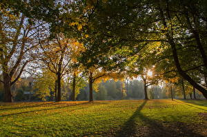 Fotos Park Gras Bäume Lichtstrahl Blattwerk Ast Regensburg Natur
