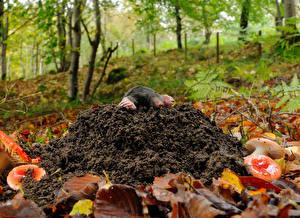 Bilder Pilze Natur Blattwerk  ein Tier