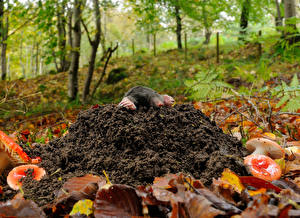 Desktop hintergrundbilder Pilze Natur Blattwerk  ein Tier