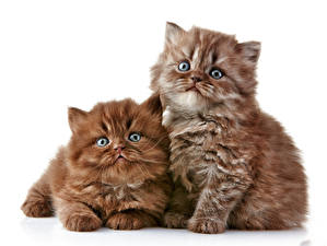 Wallpapers Cats Kitty cat 2 Fluffy animal