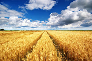 Fotos Acker Himmel Weizen Ähre Wolke
