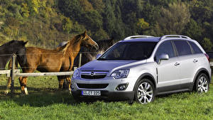 Fotos Opel Hauspferd Silber Farbe Gras 2011 Antara