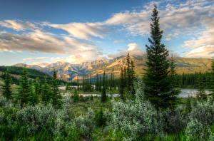 Bilder Kanada Park Gebirge Himmel Landschaftsfotografie Fichten Strauch HDR Jasper park