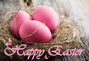 Bilder Feiertage Ostern Ei Rosa Farbe Nest