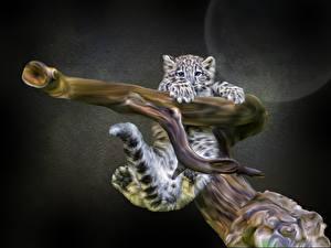 Fotos Große Katze Irbis Jungtiere Tiere