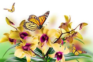 Hintergrundbilder Orchidee Schmetterlinge Monarchfalter Blumen