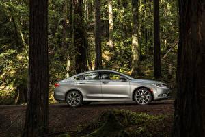 Photo Chrysler Forests Silver color Metallic Side Trunk tree Sedan 2015 200 sedan automobile