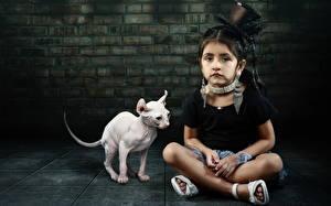 Fotos Katze Sphynx-Katze Kleine Mädchen Der Hut Sitzend Kinder