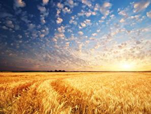 Hintergrundbilder Felder Landschaftsfotografie Himmel Sonnenaufgänge und Sonnenuntergänge Weizen Ähre Wolke