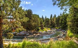 Bilder USA Disneyland Park Kalifornien Anaheim HDRI Bäche Bäume Natur
