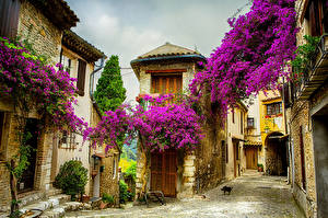 Wallpapers France Houses Buganvilla Street Nice Cities