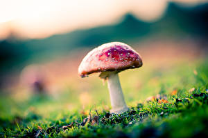 Bilder Großansicht Pilze Natur Natur