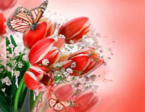 Hintergrundbilder Tulpen Schmetterlinge Monarchfalter Rot Blumen