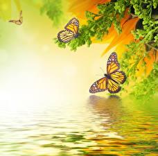 Bilder Insekten Schmetterlinge Monarchfalter