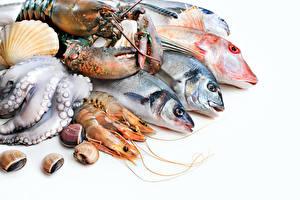 Fotos Meeresfrüchte Fische - Lebensmittel Garnelen Hummerartige Muscheln Lebensmittel