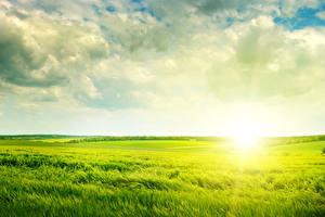Fotos Acker Sonnenaufgänge und Sonnenuntergänge Himmel Weizen Ähre Wolke Natur