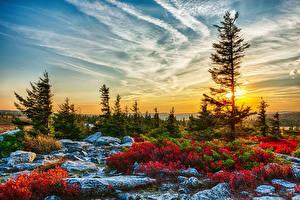 Hintergrundbilder Vereinigte Staaten Landschaftsfotografie Sonnenaufgänge und Sonnenuntergänge Himmel Fichten Strauch HDRI West Virginia Natur