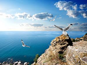 Pictures Russia Coast Sea Sky Gull Crimea Clouds Nature