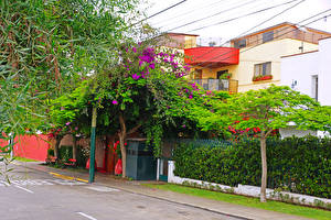 Pictures Peru Houses Street Trees Lima Cities