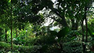 Pictures Singapore Park Trees Shrubs Nature