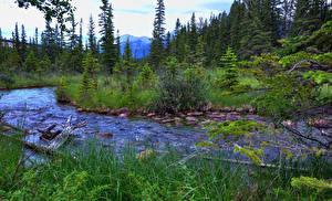 Hintergrundbilder Kanada Park Flusse Bäume Jasper park