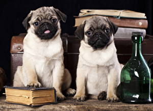 Picture Dog Pug Two Bottles Book Animals