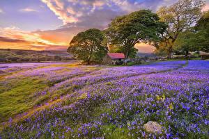 Hintergrundbilder Landschaftsfotografie Acker Lavendel Sonnenaufgänge und Sonnenuntergänge Bäume Natur
