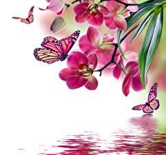 Hintergrundbilder Insekten Schmetterling Gezeichnet Orchidee Monarchfalter